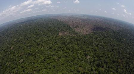 Ползите от биоенергията за смекчаване на климатичните промени ще са много спорни в близко бъдеще. Снимка: Associated Press