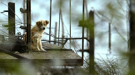 В Истанбул има повече от 150 000 бездомни кучета. Снимка Reuters