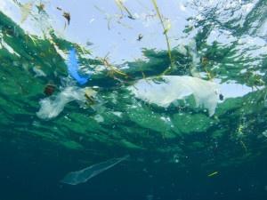 Нова карта показва как се движат океанските острови от боклук © Снимка: Shutterstock